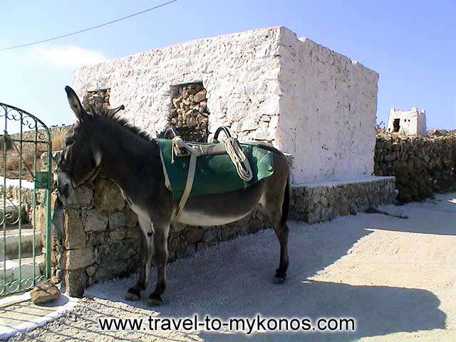 In the past the donkey,was the main means of transport. MYKONOS PHOTO GALLERY - ANO MERA